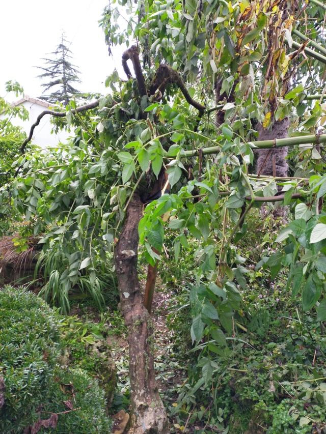 La tempête du 3 octobre, dans le jardin de Michou. Img20387