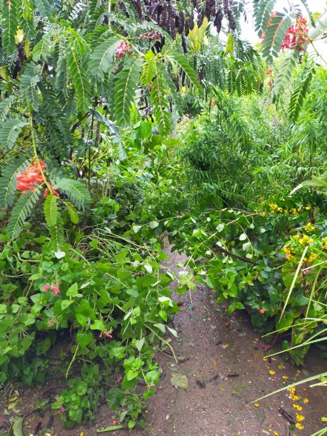 La tempête du 3 octobre, dans le jardin de Michou. Img20388