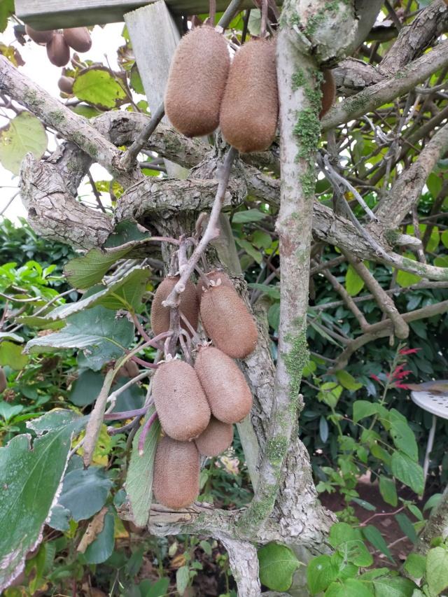 Des fruits d'automne dans le jardin de Michel Img20498