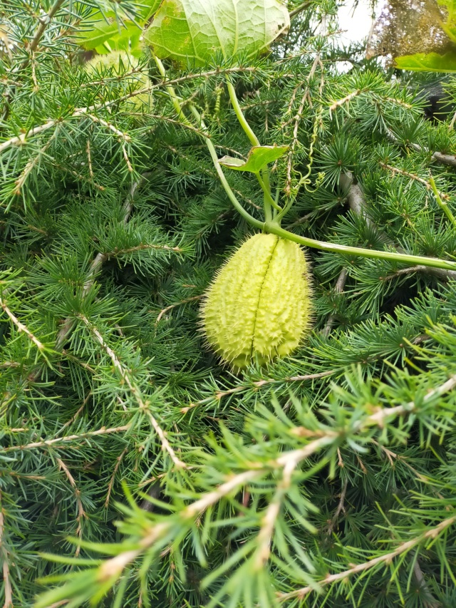 Des fruits d'automne dans le jardin de Michel Img20500