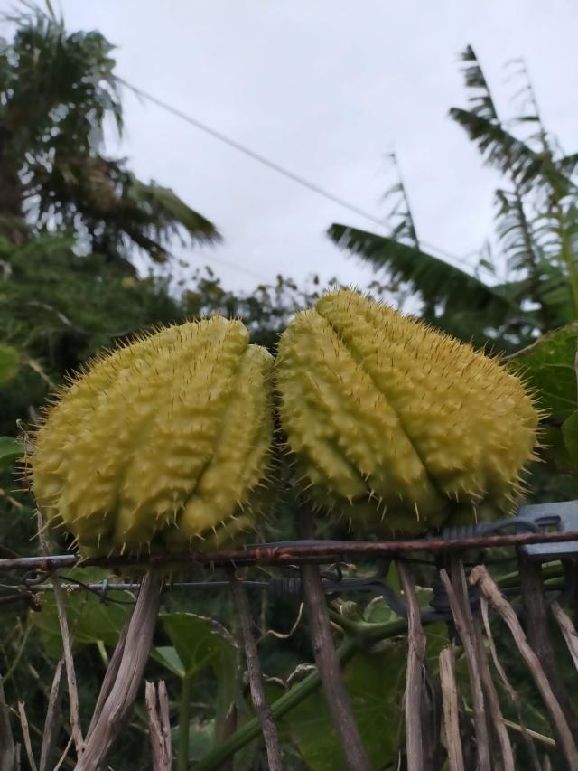 Des fruits d'automne dans le jardin de Michel Img20501