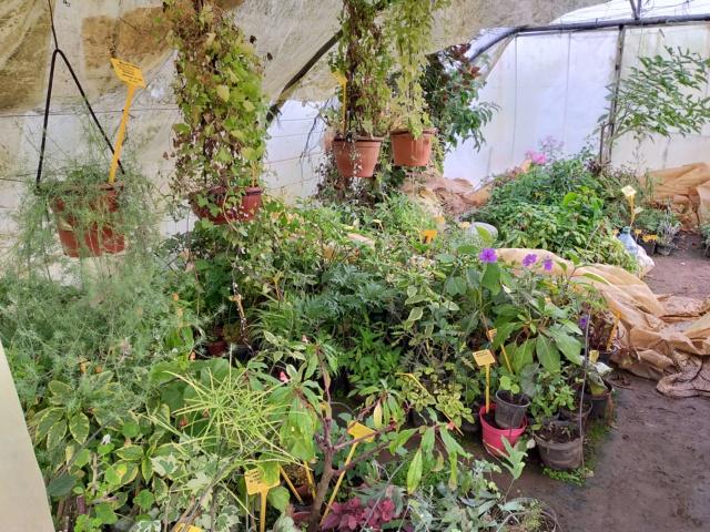 Hivernage de vos plantes 2020 Img20565