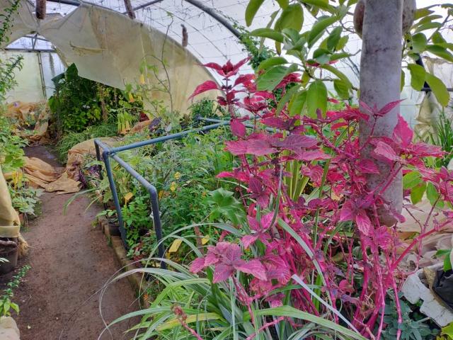 Hivernage de vos plantes 2020 Img20567