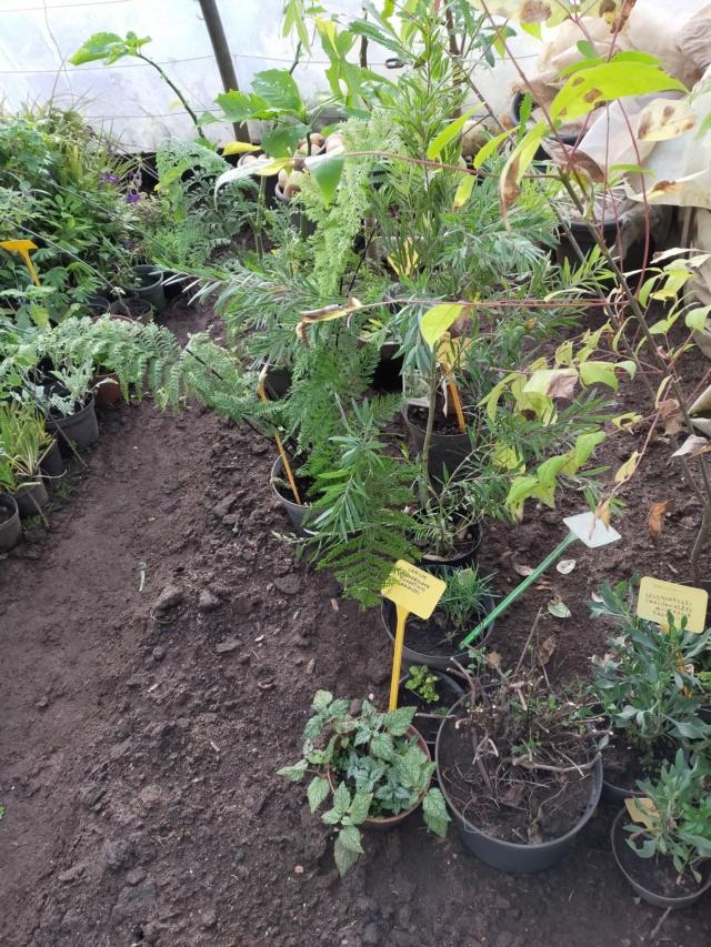 Hivernage de vos plantes 2020 Img20568