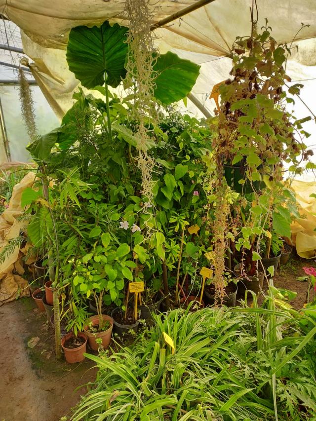 Hivernage de vos plantes 2020 Img20569