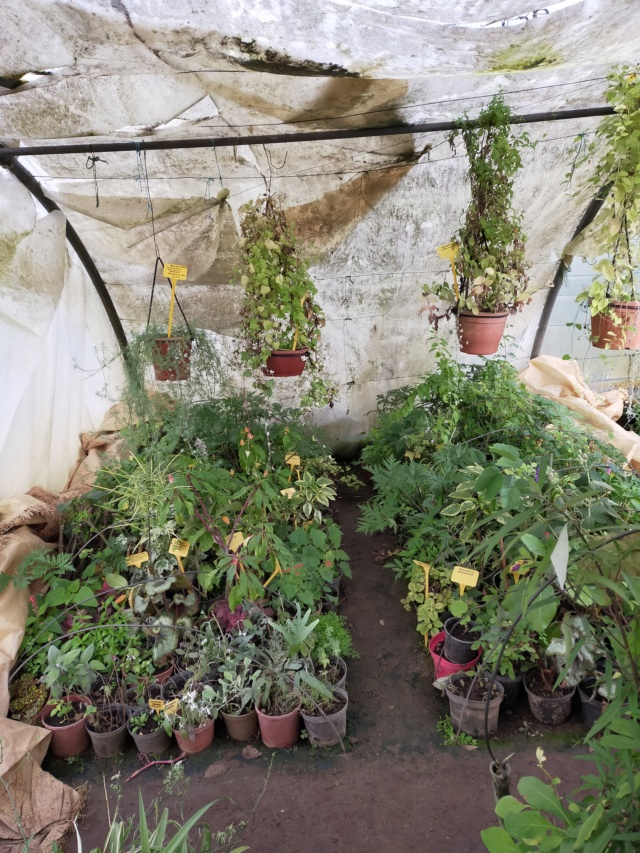 Hivernage de vos plantes 2020 Img20572
