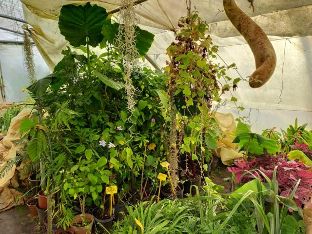 Michou - un jardin de curiosités, botanique, le moulin, l'oasis de Michel  (44) - Page 10 Img20594