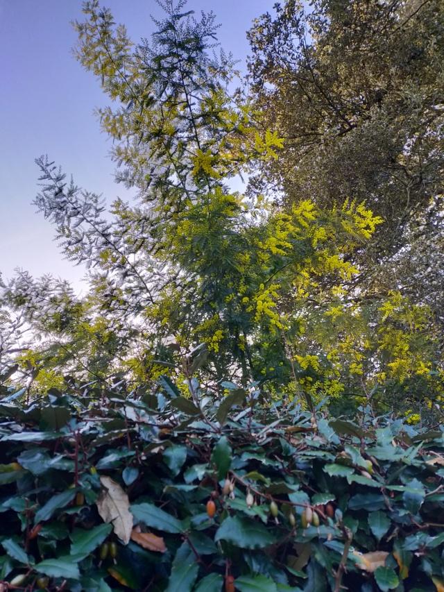 Michou - un jardin de curiosités, botanique, le moulin, l'oasis de Michel  (44) - Page 12 Img20923