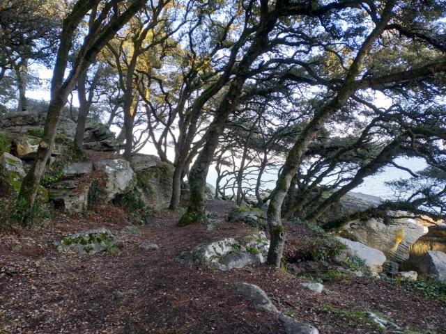 Découvertes et voyages au sud de Nantes et son climat protégé. Michou Img21089