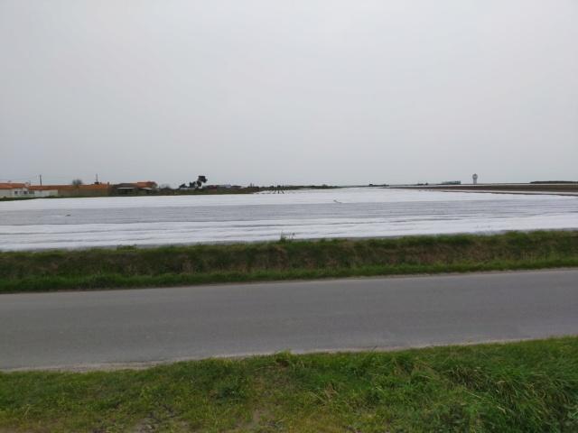 Découvertes et voyages au sud de Nantes et son climat protégé. Michou Img21177