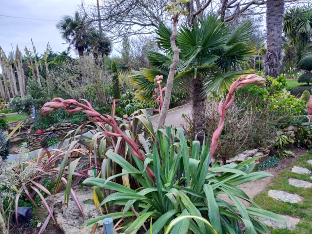 Michou - un jardin de curiosités, botanique, le moulin, l'oasis de Michel  (44) - Page 13 Img21278
