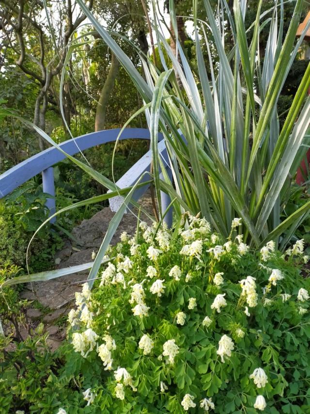 Michou - un jardin de curiosités, botanique, le moulin, l'oasis de Michel  (44) - Page 14 Img21432