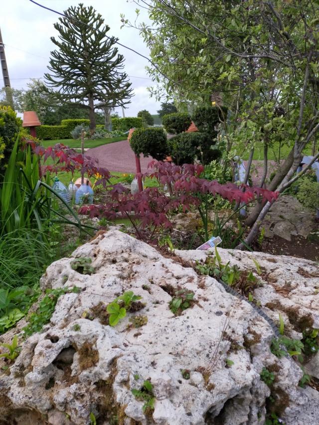 Michou - un jardin de curiosités, botanique, le moulin, l'oasis de Michel  (44) - Page 14 Img21485