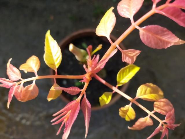 Michou: Des devinettes de plantes à identifier ??? Img21511