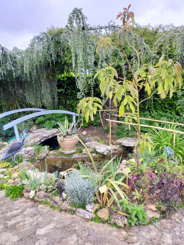 Michou - un jardin de curiosités, botanique, le moulin, l'oasis de Michel  (44) - Page 15 Img21593