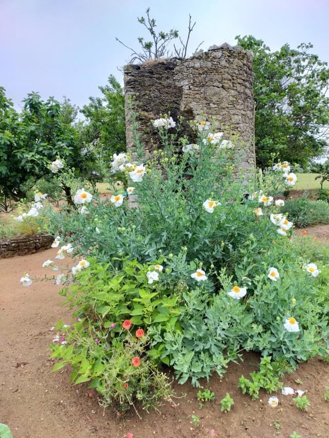 Michou - un jardin de curiosités, botanique, le moulin, l'oasis de Michel  (44) - Page 15 Img21648