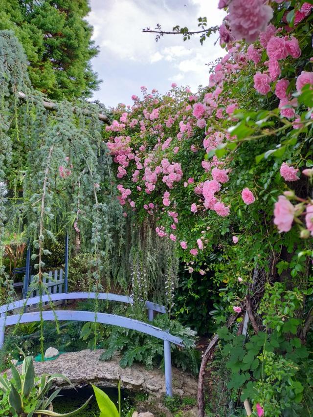 Michou - un jardin de curiosités, botanique, le moulin, l'oasis de Michel  (44) - Page 16 Img21662