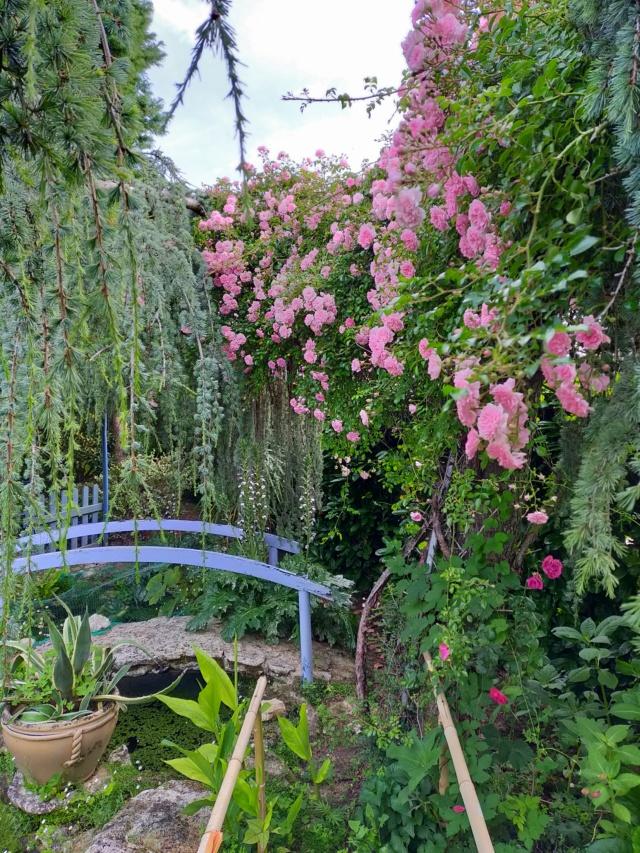 Michou - un jardin de curiosités, botanique, le moulin, l'oasis de Michel  (44) - Page 16 Img21671