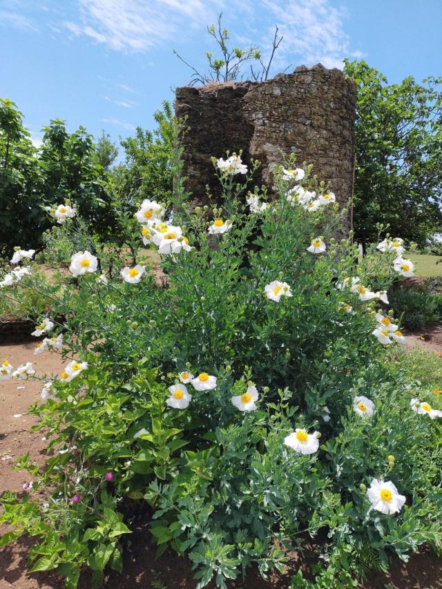 Michou - un jardin de curiosités, botanique, le moulin, l'oasis de Michel  (44) - Page 16 Img21675