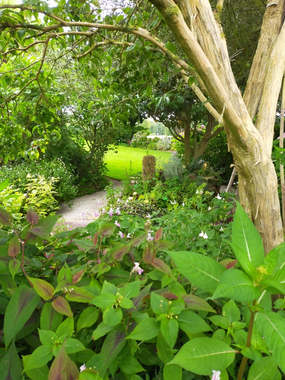 Michou - un jardin de curiosités, botanique, le moulin, l'oasis de Michel  (44) - Page 16 Img21814