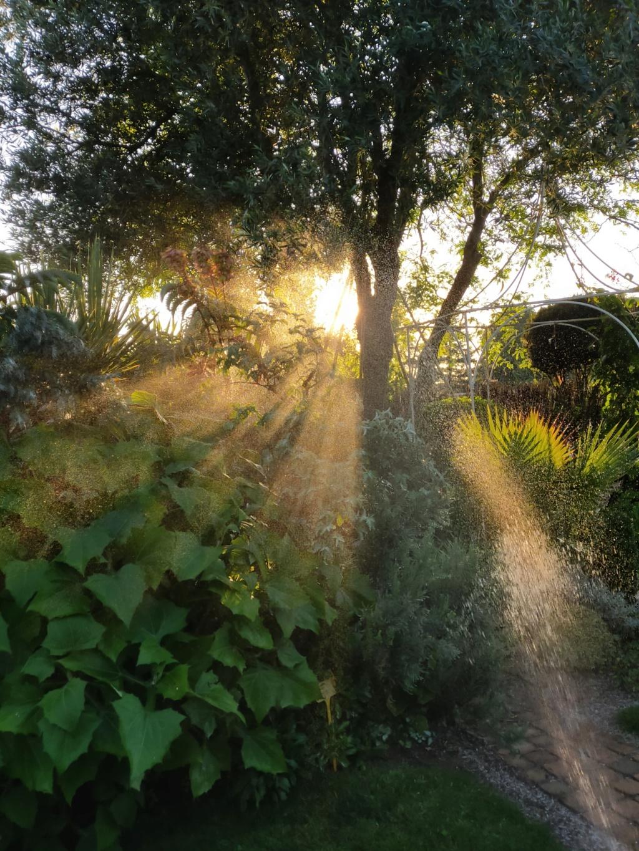Michou - un jardin de curiosités, botanique, le moulin, l'oasis de Michel  (44) - Page 16 Img21838