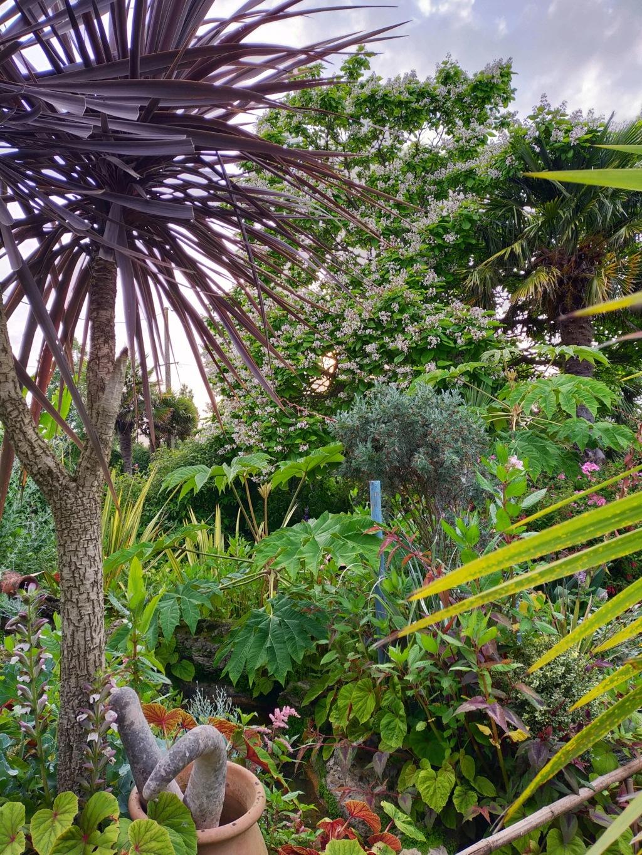 Michou - un jardin de curiosités, botanique, le moulin, l'oasis de Michel  (44) - Page 16 Img21840