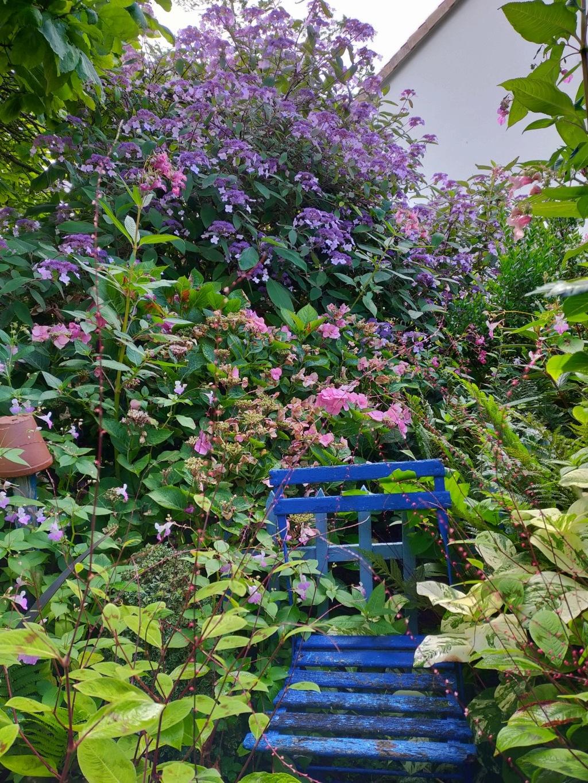 Michou - un jardin de curiosités, botanique, le moulin, l'oasis de Michel  (44) - Page 18 Img22092