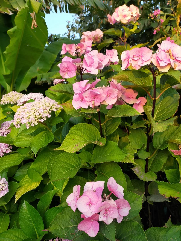 Michou - un jardin de curiosités et de rêves, voici l'oasis botanique de Marie-Jo et de Michel  (44) - Page 19 Img22166