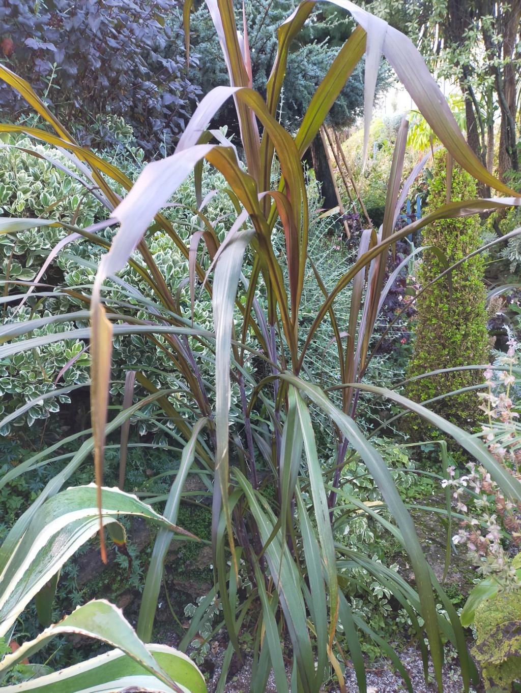 Michou - un jardin de curiosités et de rêves, voici l'oasis botanique de Marie-Jo et de Michel  (44) - Page 19 Img22171