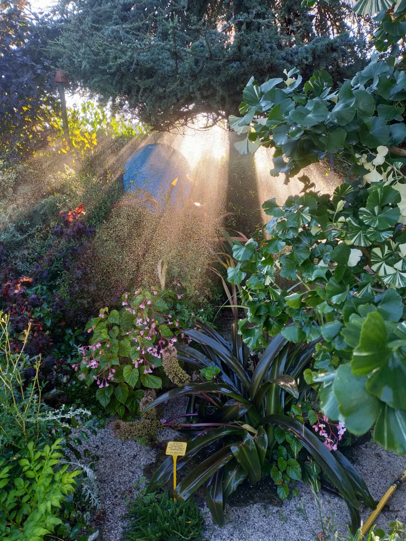 Michou - un jardin de curiosités et de rêves, voici l'oasis botanique de Marie-Jo et de Michel  (44) - Page 19 Img22173
