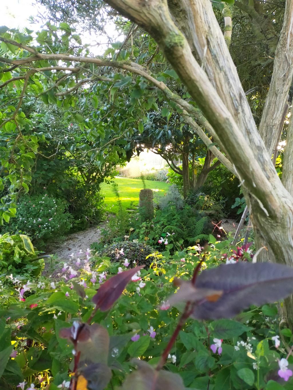 Michou - un jardin de curiosités et de rêves, voici l'oasis botanique de Marie-Jo et de Michel  (44) - Page 19 Img22190