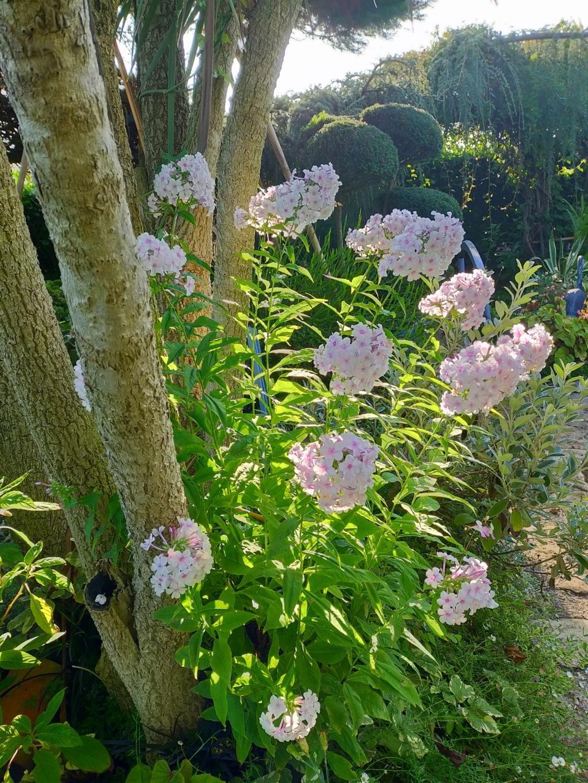 Michou - un jardin de curiosités et de rêves, voici l'oasis botanique de Marie-Jo et de Michel  (44) - Page 19 Img22199