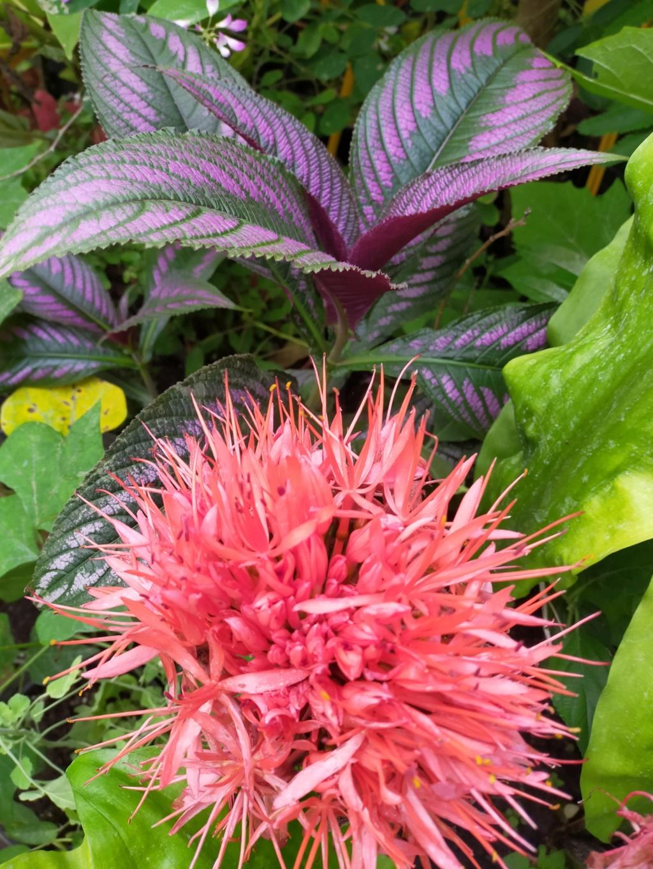 Michou - un jardin de curiosités et de rêves, voici l'oasis botanique de Marie-Jo et de Michel  (44) - Page 19 Img22246