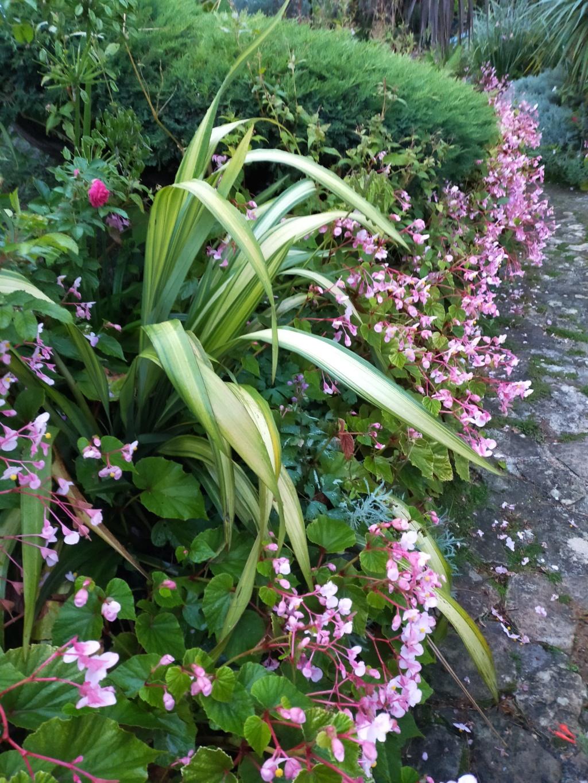 Michou - un jardin de curiosités et de rêves, voici l'oasis botanique de Marie-Jo et de Michel  (44) - Page 19 Img22275