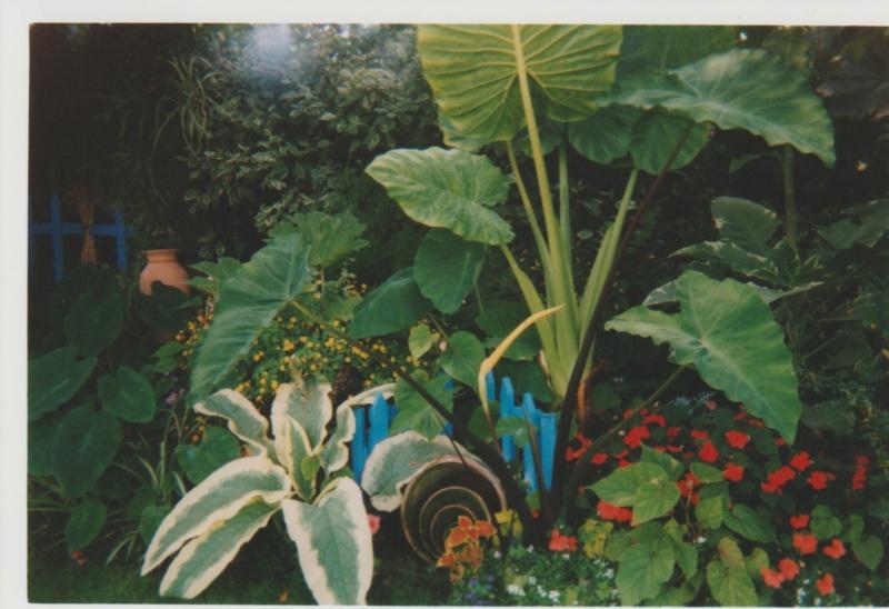 Le jardin de Michou, le moulin turquois de la Martinière, 44 - Page 2 Numzo102