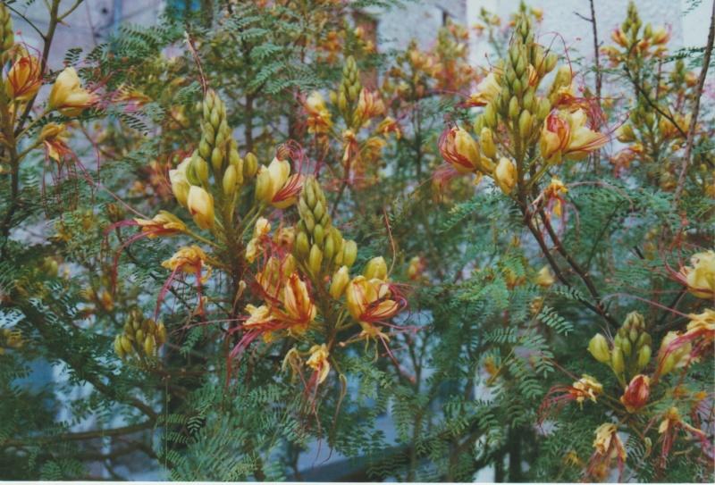 Michou - un jardin de curiosités, botanique, le moulin, l'oasis de Michel  (44) - Page 3 Numzo161