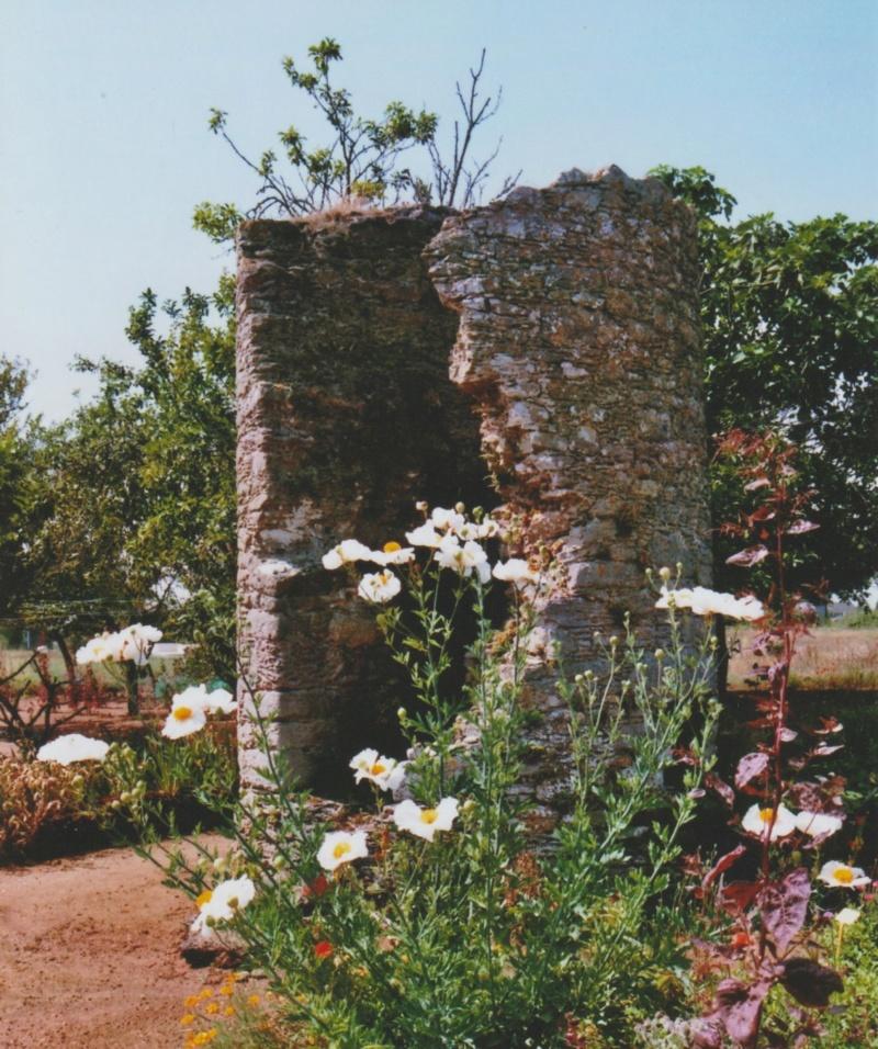 Michou - un jardin de curiosités, botanique, le moulin, l'oasis de Michel  (44) - Page 3 Numzo162