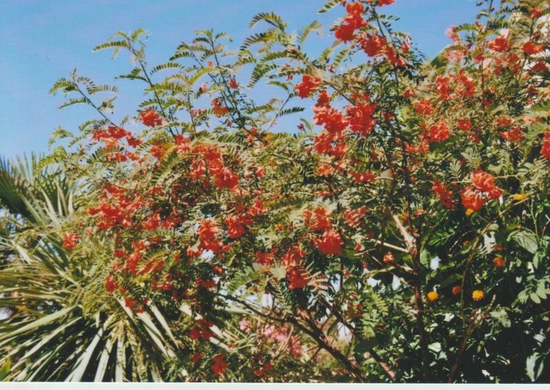 Michou - un jardin de curiosités, botanique - L'oasis de Michel  (44) - Page 4 Numzo189