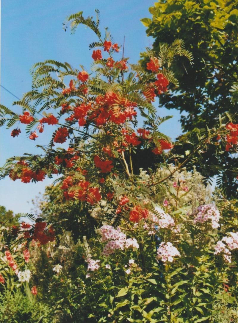 Michou - un jardin de curiosités, botanique - L'oasis de Michel  (44) - Page 4 Numzo195