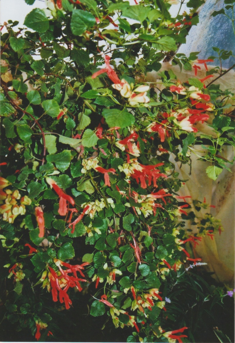 Michou - un jardin de curiosités, botanique - L'oasis de Michel  (44) - Page 5 Numzo232
