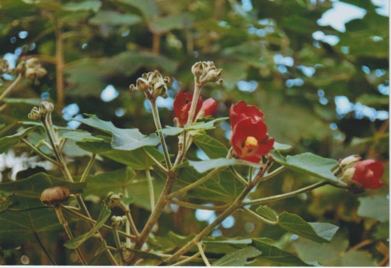 Michou - un jardin de curiosités, botanique - L'oasis de Michel  (44) - Page 5 Numzo259