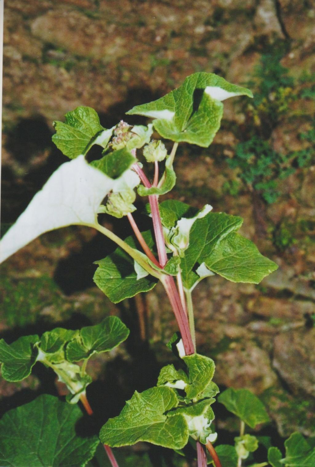 Michou - un jardin de curiosités, botanique - L'oasis de Michel  (44) - Page 6 Numzo326