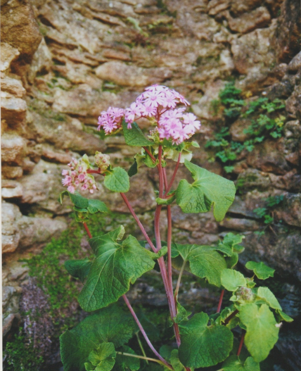 Michou - un jardin de curiosités, botanique - L'oasis de Michel  (44) - Page 6 Numzo327