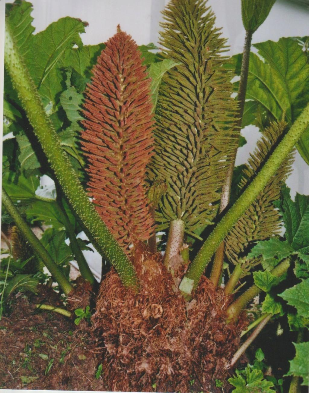 Michou - un jardin de curiosités, botanique - L'oasis de Michel  (44) - Page 6 Numzo348