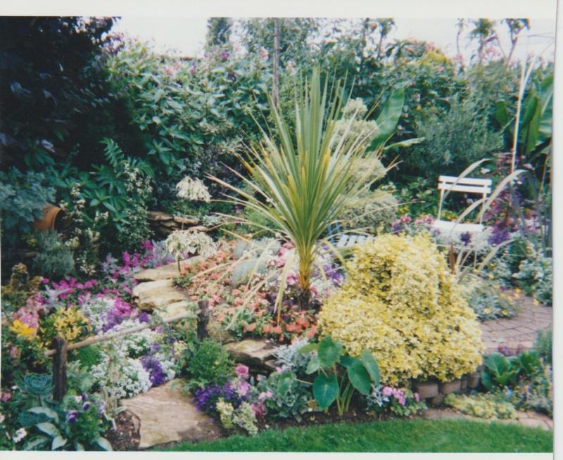 Verbena hortensis 'Patricia' Numzor23