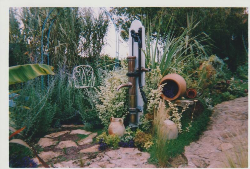 Verbena hortensis 'Patricia' Numzor64
