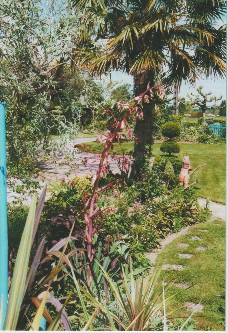 Beschorneria yuccoides - Page 5 Numzor78