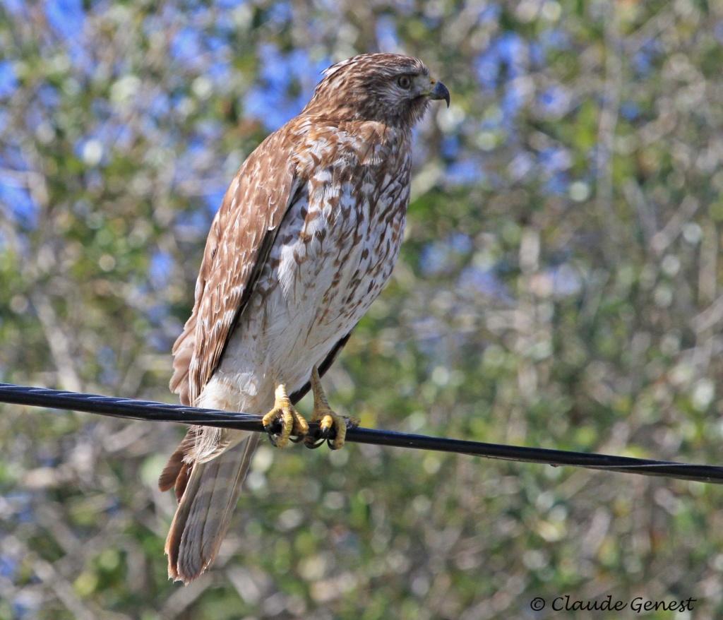 Aide d'identification pour ces 2 oiseaux svp. Florid10