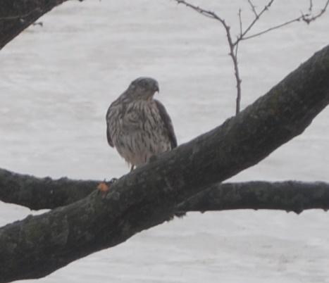 Petite visite Oiseau10