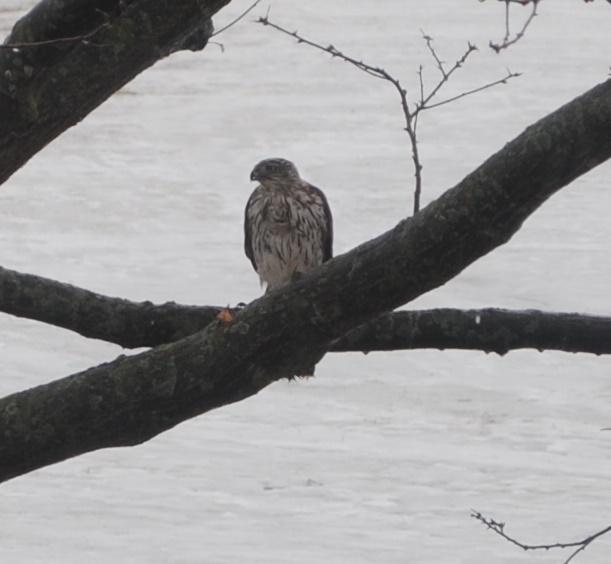 Petite visite Oiseau11